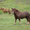 35126-la-riera-caballos-de-babia