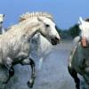 400_1212203378_caballos