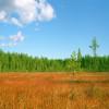 Landscape_Online_Wallpaper_Changer