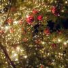 Navidad44b5ad4_z