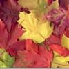 Consejos para las mejores fotos de otoño