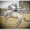 Las mejores fotos de caballos