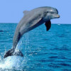 delfines-27_min
