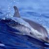 delfines-30_min