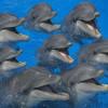 delfines-31_min