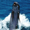delfines-36_min
