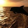 delfines-37_min