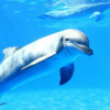 delfines-40_min