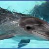delfines-42_min