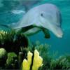 delfines-49_min