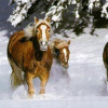 foto-caballo-nieve