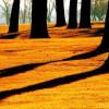 fotos-de-sombras-11