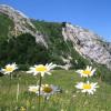 fotosfloresmargaritas.jpg