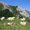 Fotos de flores | margaritas