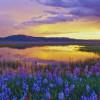 landscape01-002
