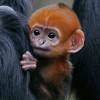 Las fotos más tiernas de animales