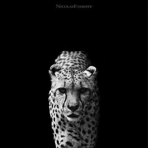 En este trabajo combino la belleza de las fotos en blanco y negro con ...: haciendofotos.com/fotos-de-animales-en-blanco-y-negro