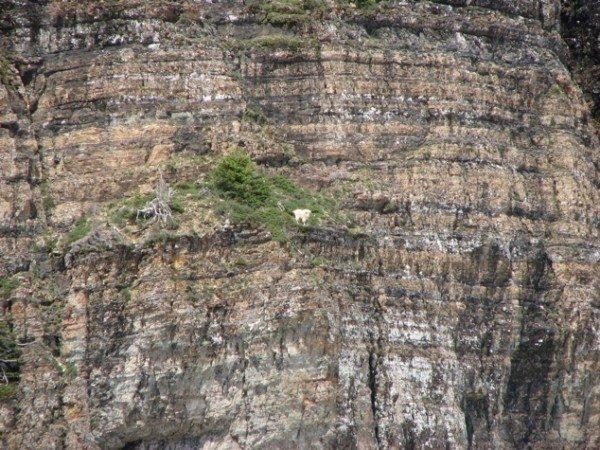 13-fotos-de-cabras-locas-en-los-acantilados-8-pequeña-cabra-en-un-acantilado