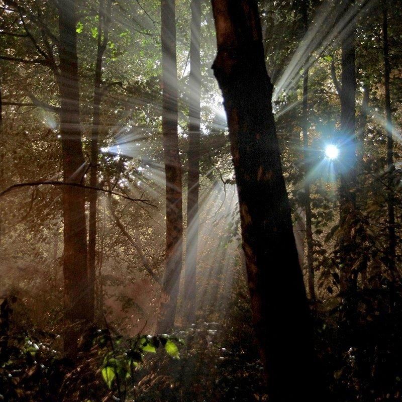 árboles juego de luces y sombras