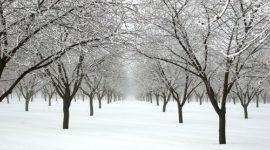 Consejos para hacer fotos con nieve