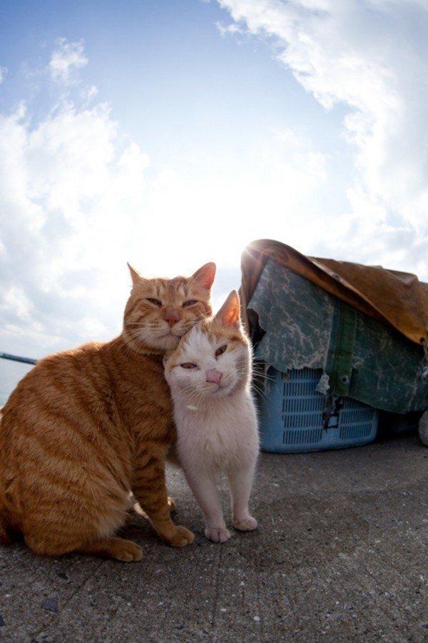 50-fotos-de-la-isla-cielo-de-los-gatos-en-japon-las-mejores-dos-gatos-posando