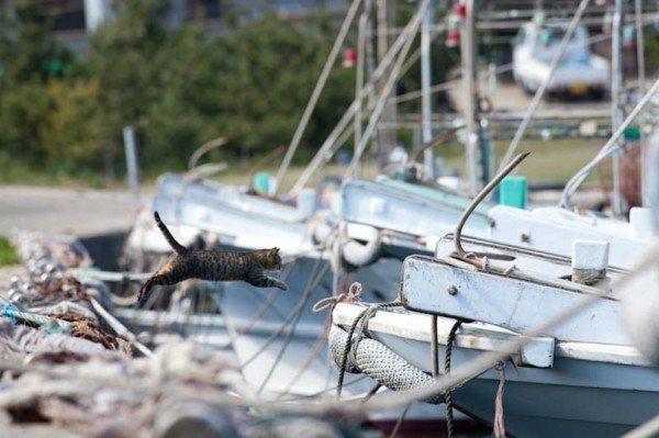 50-fotos-de-la-isla-cielo-de-los-gatos-en-japon-las-mejores-salto-de-gato