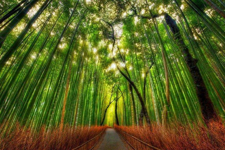 Bamboo-Forest-Arashiyama-Japón