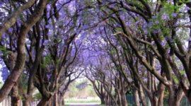 Fotografías espectaculares de árboles