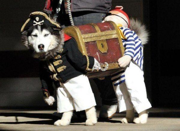 Las mejores fotos de disfraces para Halloween 2015-perro-disfrazo