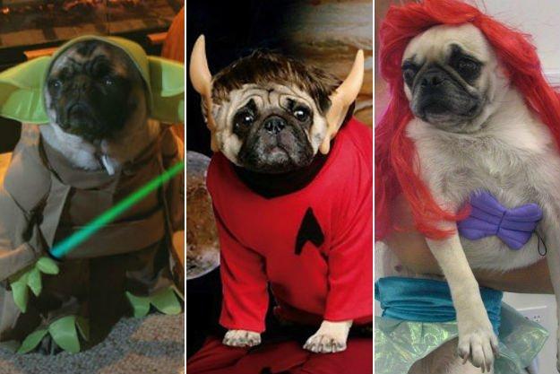 Pug-Costumes1
