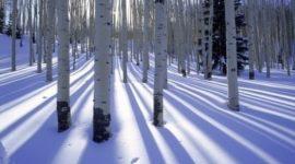 Fotos de nieve | Ajustar la exposición