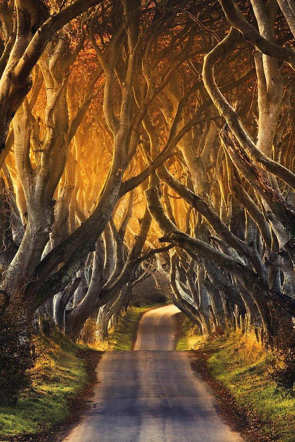 Túnel-del-Condado-de-Antrim-Irlanda