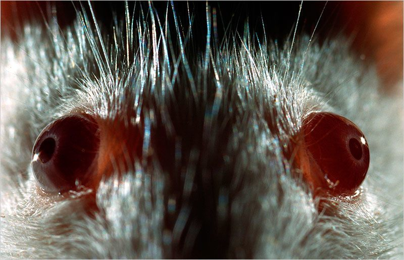 Ojos de animal