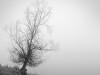 arboles-y-bosques-4