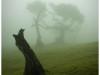 arboles-y-bosques-6