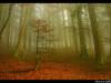 arboles-y-bosques-8
