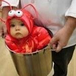 bebe-langosta