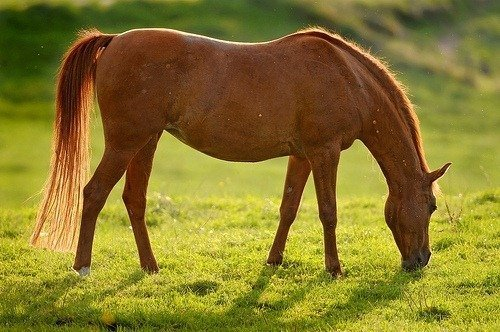 mundo caballos: