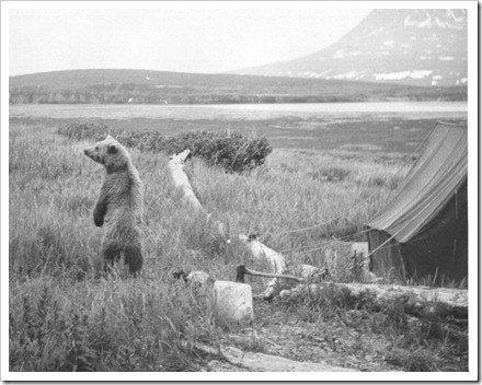 campamentos oso
