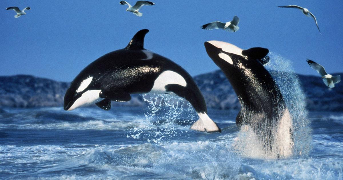 canon-ofrece-un-curso-de-fotografia-online-gratis-orcas