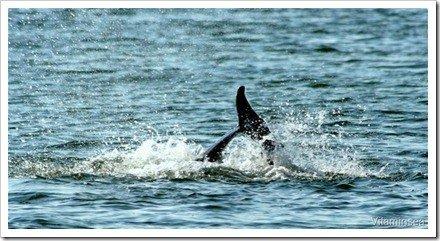 cola delfin