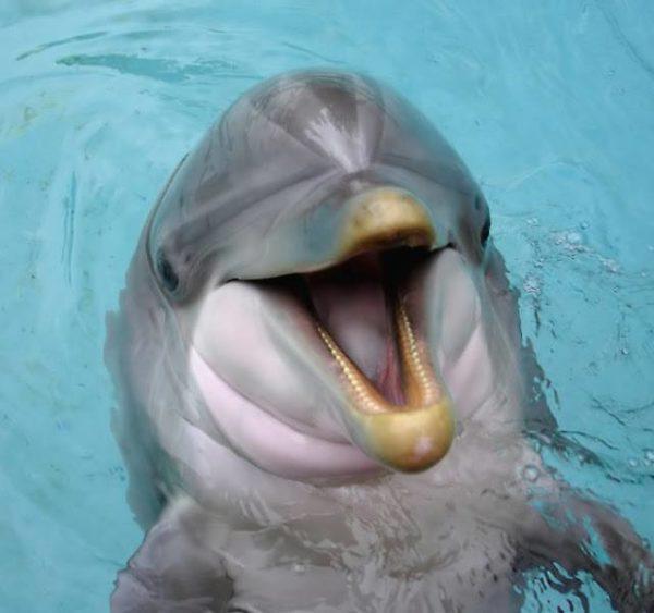 delfines-india