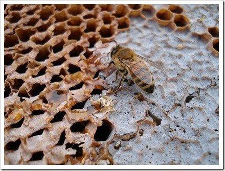 enfoque insecto macro