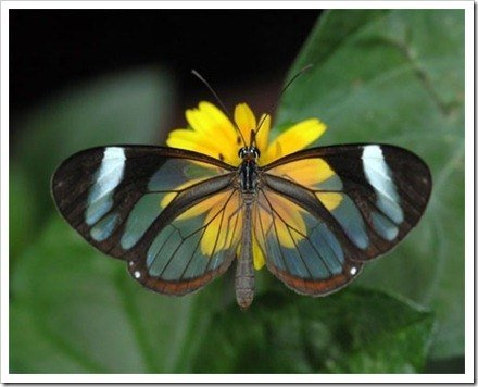 foto mariposa
