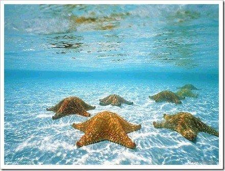 fotos bajo el agua