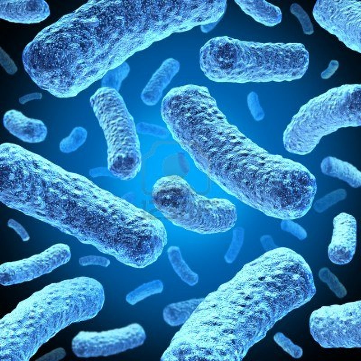 fotos-de-bacterias