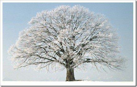 Fotos profesionales en invierno