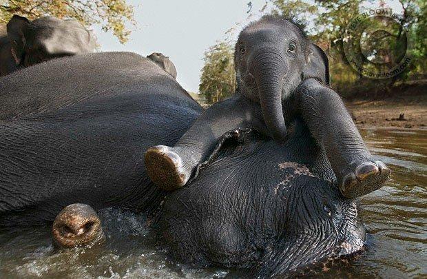 fotoselefantes3.jpg