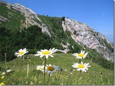 fotos-flores-margaritas