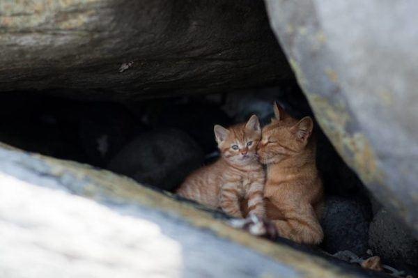 gatos_isla_cielo_japon